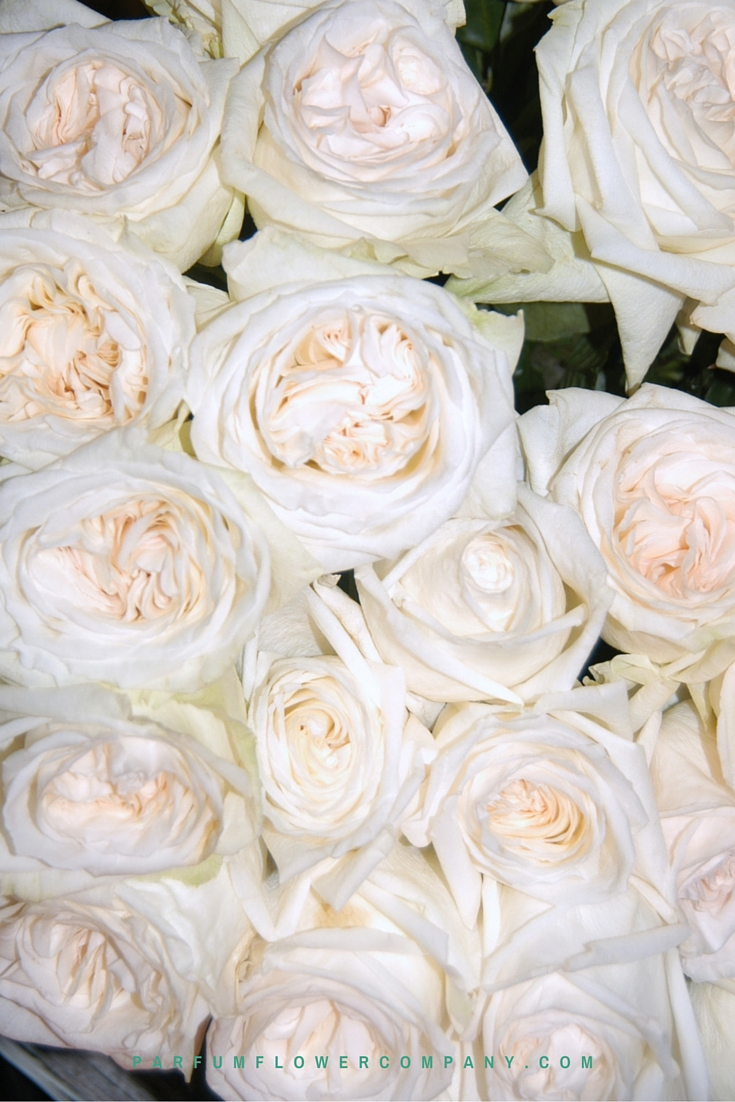 A Delightfully Pure And Wholesome Aesthetic Rose. You Know Weddings Are A  Vision Of Loveliness And When Decorated With This Terrific Flower Of Love  ...