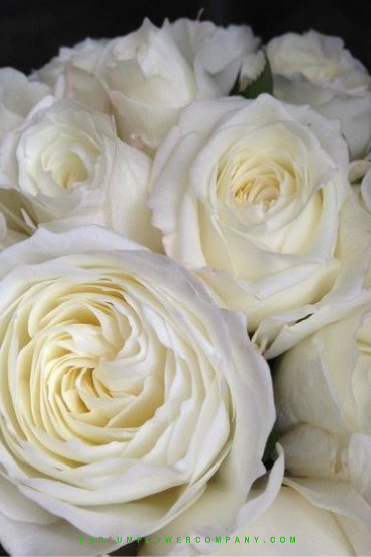 Charmant Parfum Flower Company