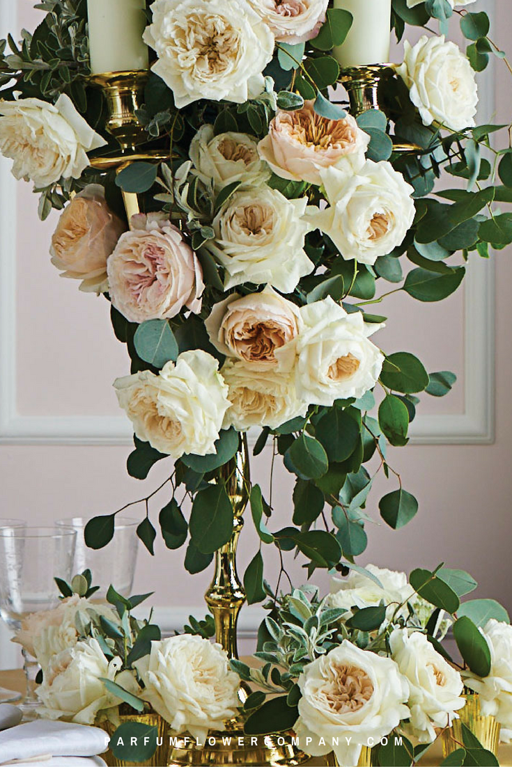 David austin wedding rose purity mightylinksfo