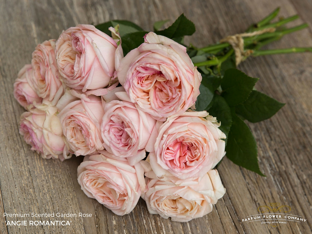 how to replant cut roses