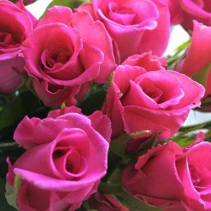 Jacaranda roses