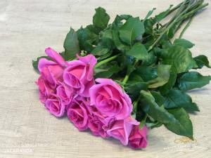 Premium scented rose Jacaranda