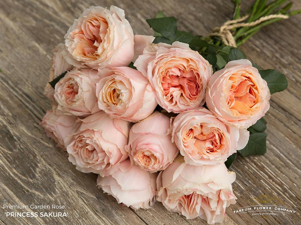 premium garden rose princess sakura - Garden Rose