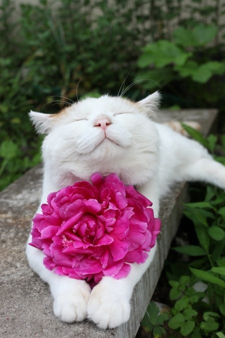smell the flowers...this cat is in heaven!