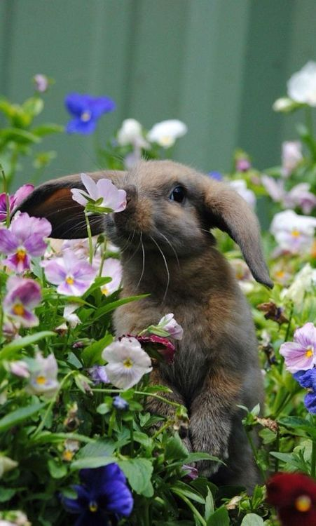 Or this bunny trying to sniff some of that amazing fragrance.
