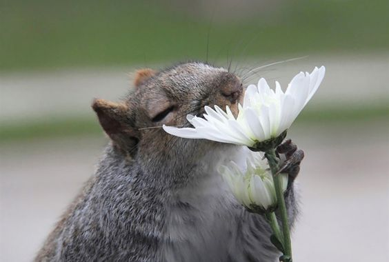 15 animals that stopped to smell the flowers…literally