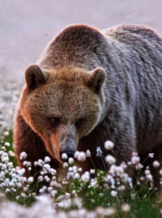 Even bears like sniff them too!