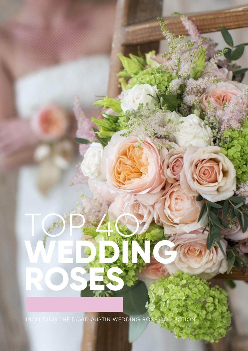 wedding book Top 40 Wedding Roses