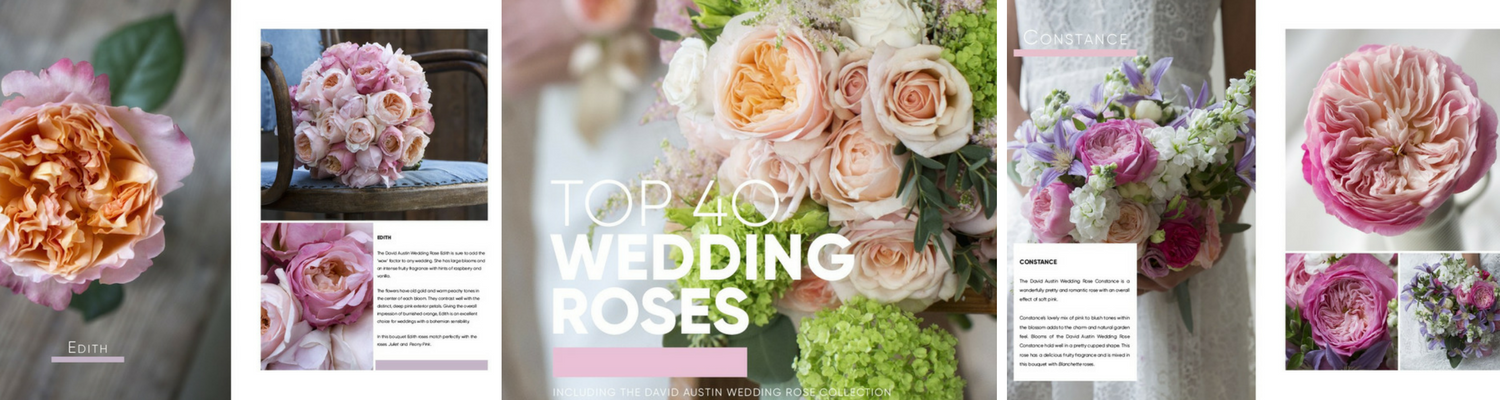 Top 40 wedding roses - wedding book