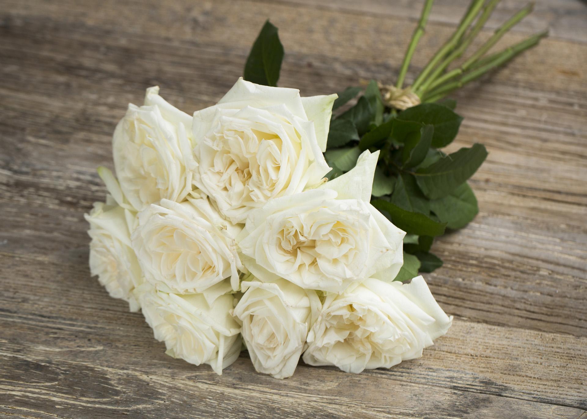 Las rosas rojas más populares eligen este Día de San Valentín | Noticias | Bradfordera.com