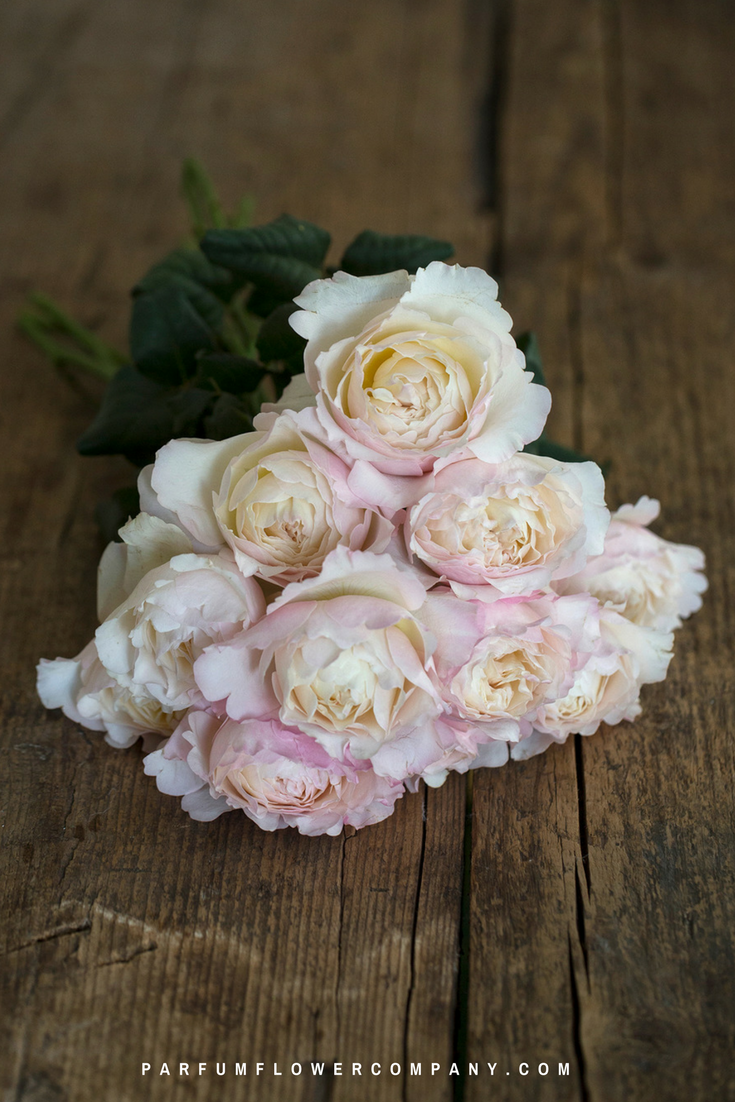 Pink roses for this wedding season: David Austin Keira