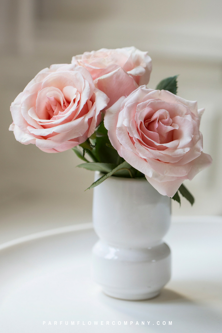 Pink roses for this wedding season: Meilland Jardin & Parfum rose Prince Jardinier