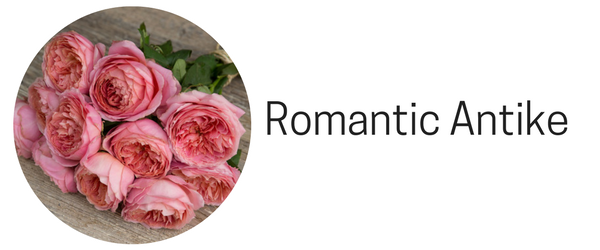 Romantic Antike roses