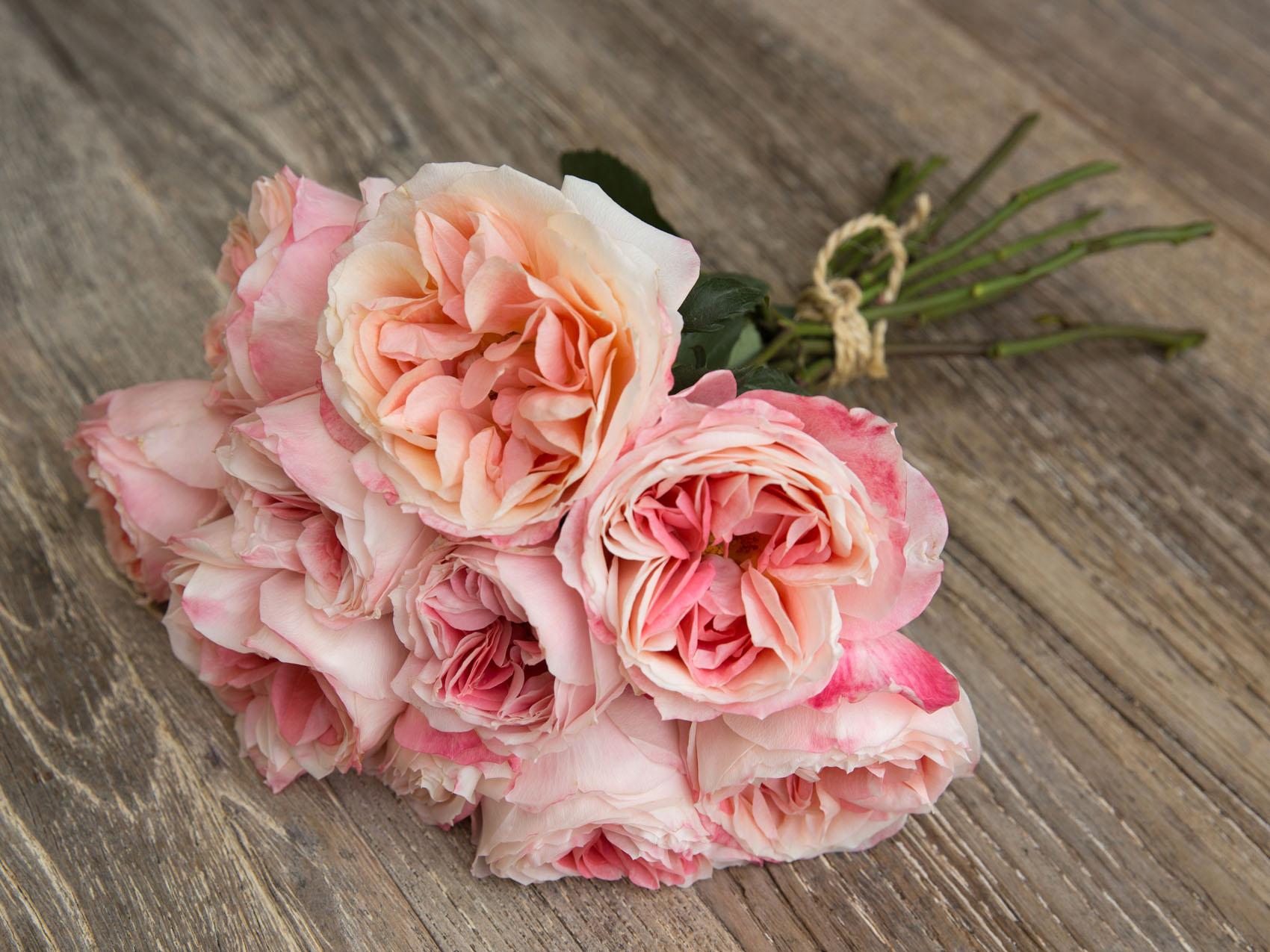 Princess roses: Premium Garden Rose Princess Aiko