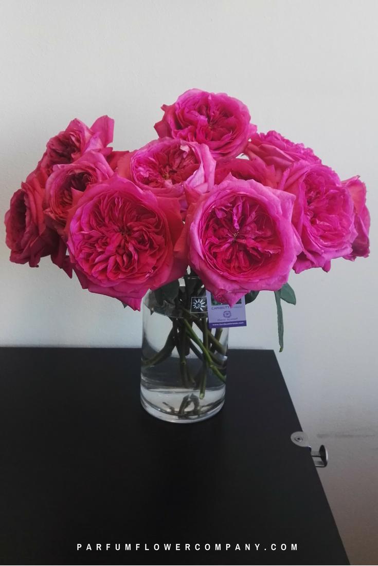 David Austin Wedding Rose Capability Parfum Flower Company