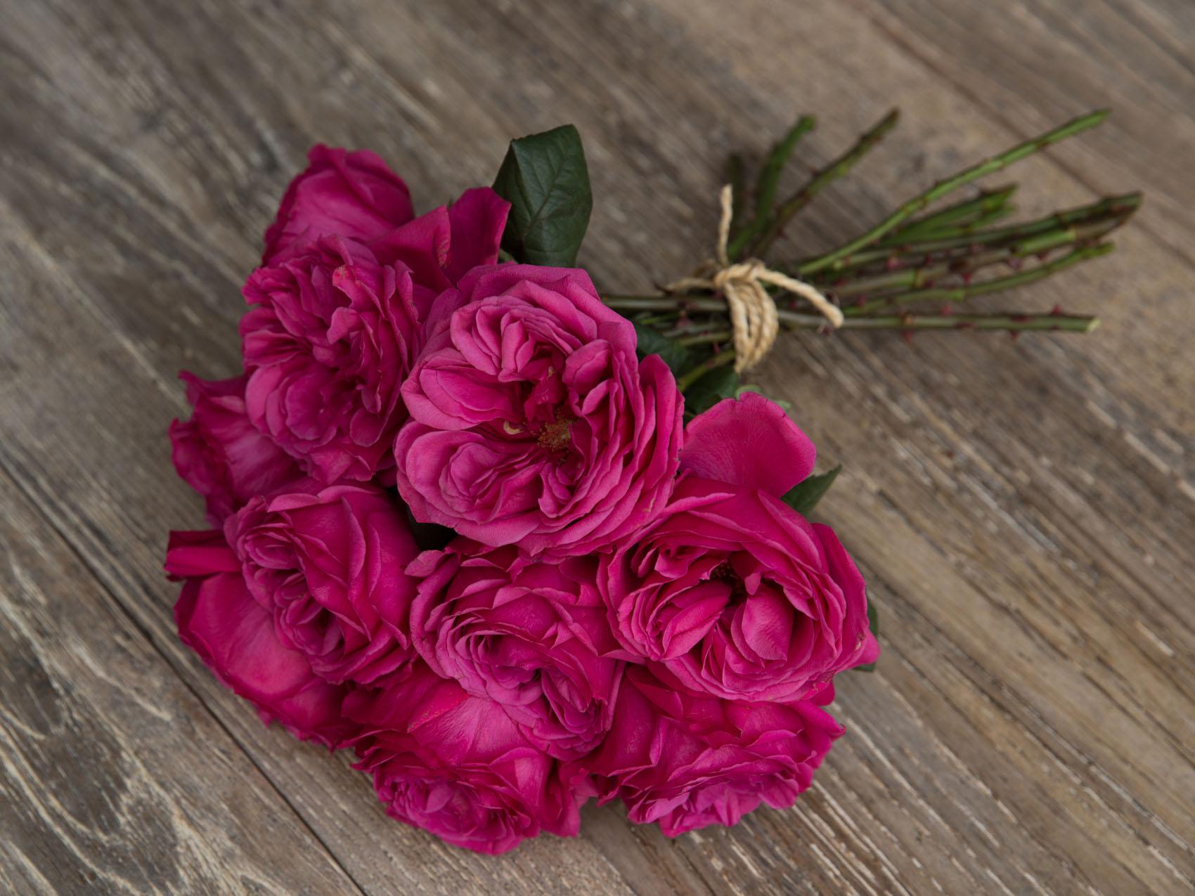 Princess roses: Premium Garden Rose Princess Kishi