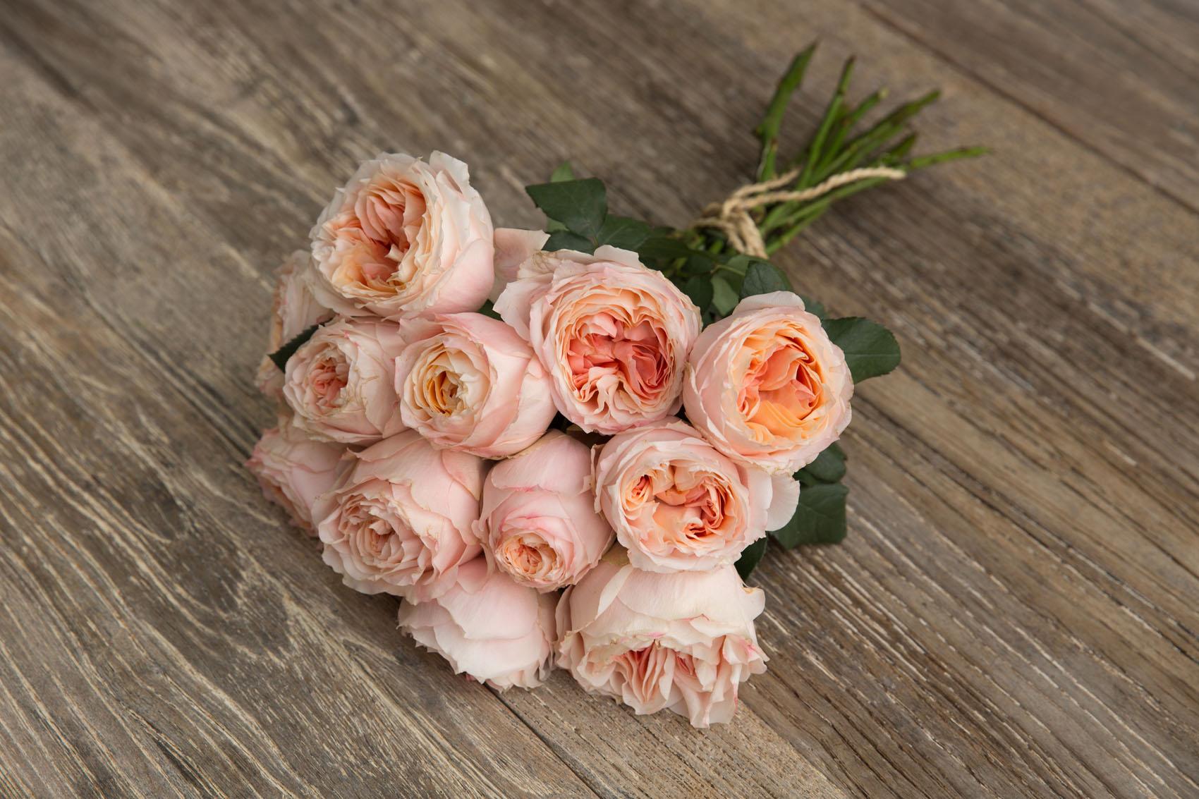 Princess roses: Premium Garden Rose Princess Sakura