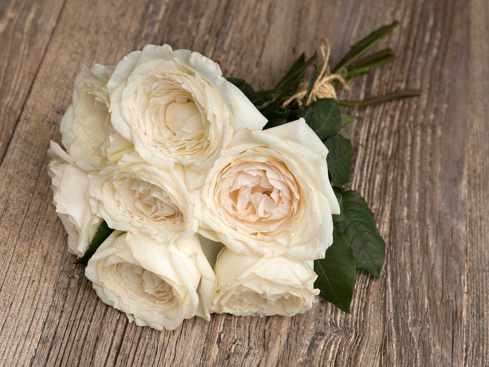Princess roses: Premium Garden Rose Princess Miyuki