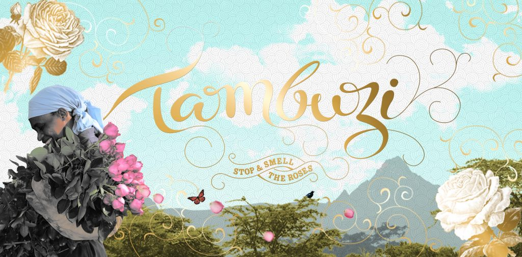 New rose introductions from Tambuzi