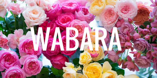 Wabara roses from japan