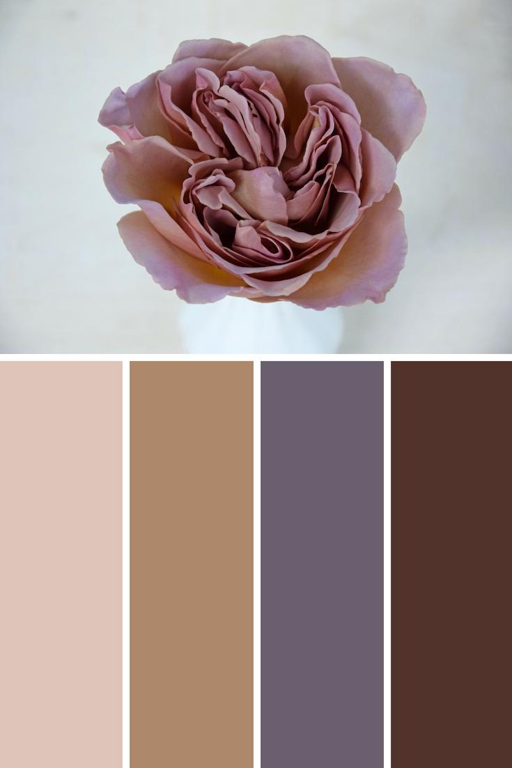Cafe Latte scented rose