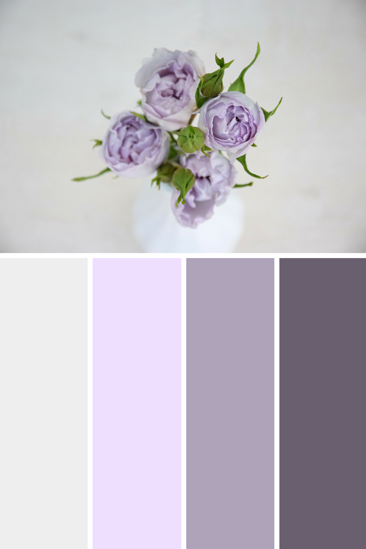Everlasting Lavender spray rose