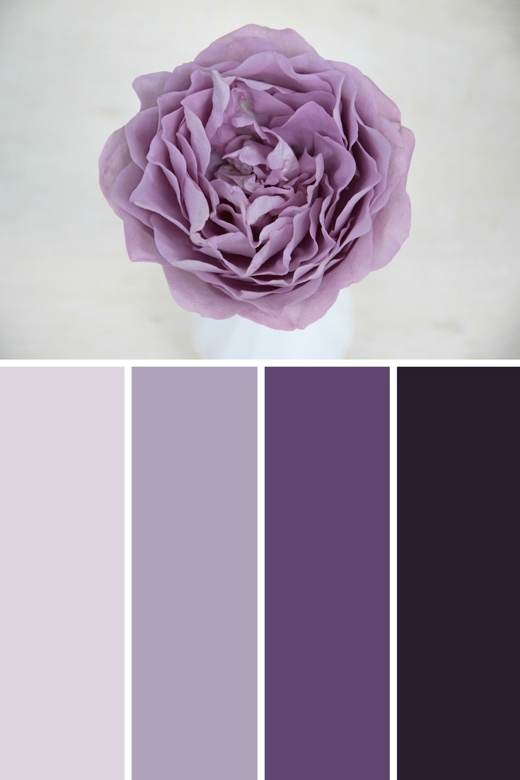Lavender bouquet garden rose