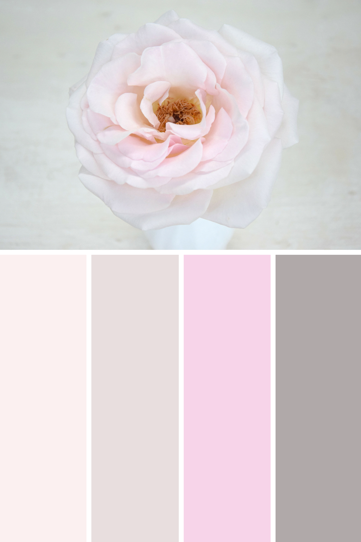 Prince Jardinier scented rose