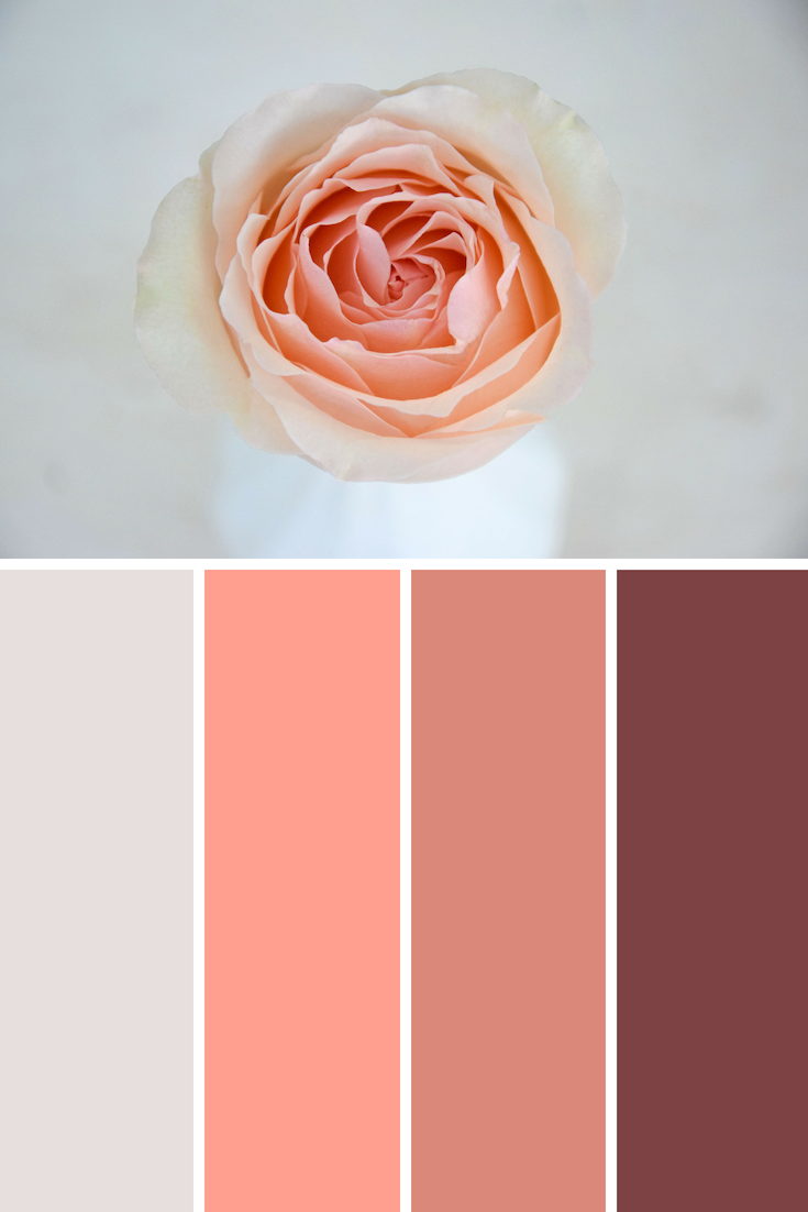 alina perfumella scented rose
