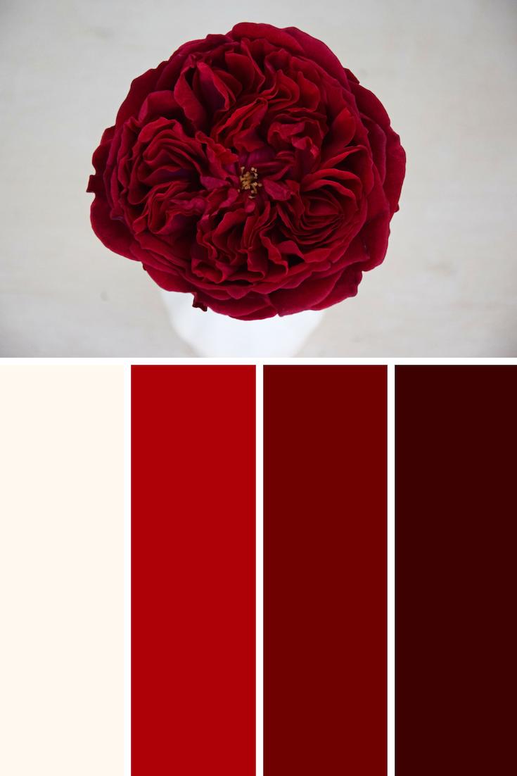 David austin tess wedding rose