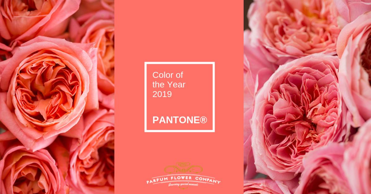 Living Coral Pantone Color Of 2019 Parfum Flower Company