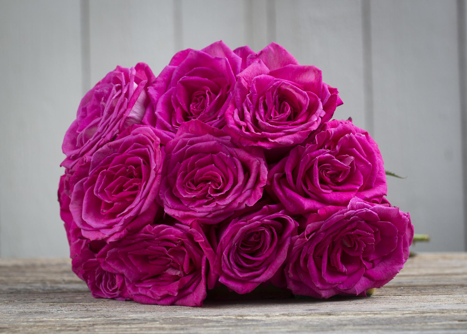 Lolita Lempicka scented roses