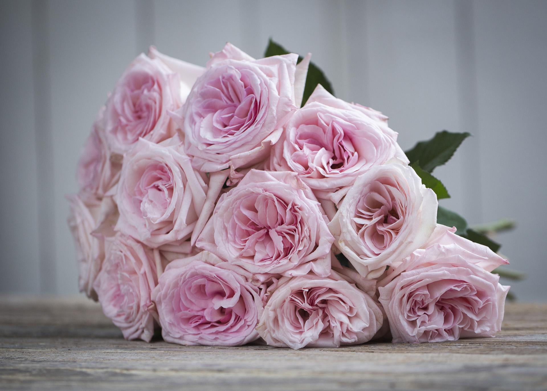 Pink O'Hara scented roses
