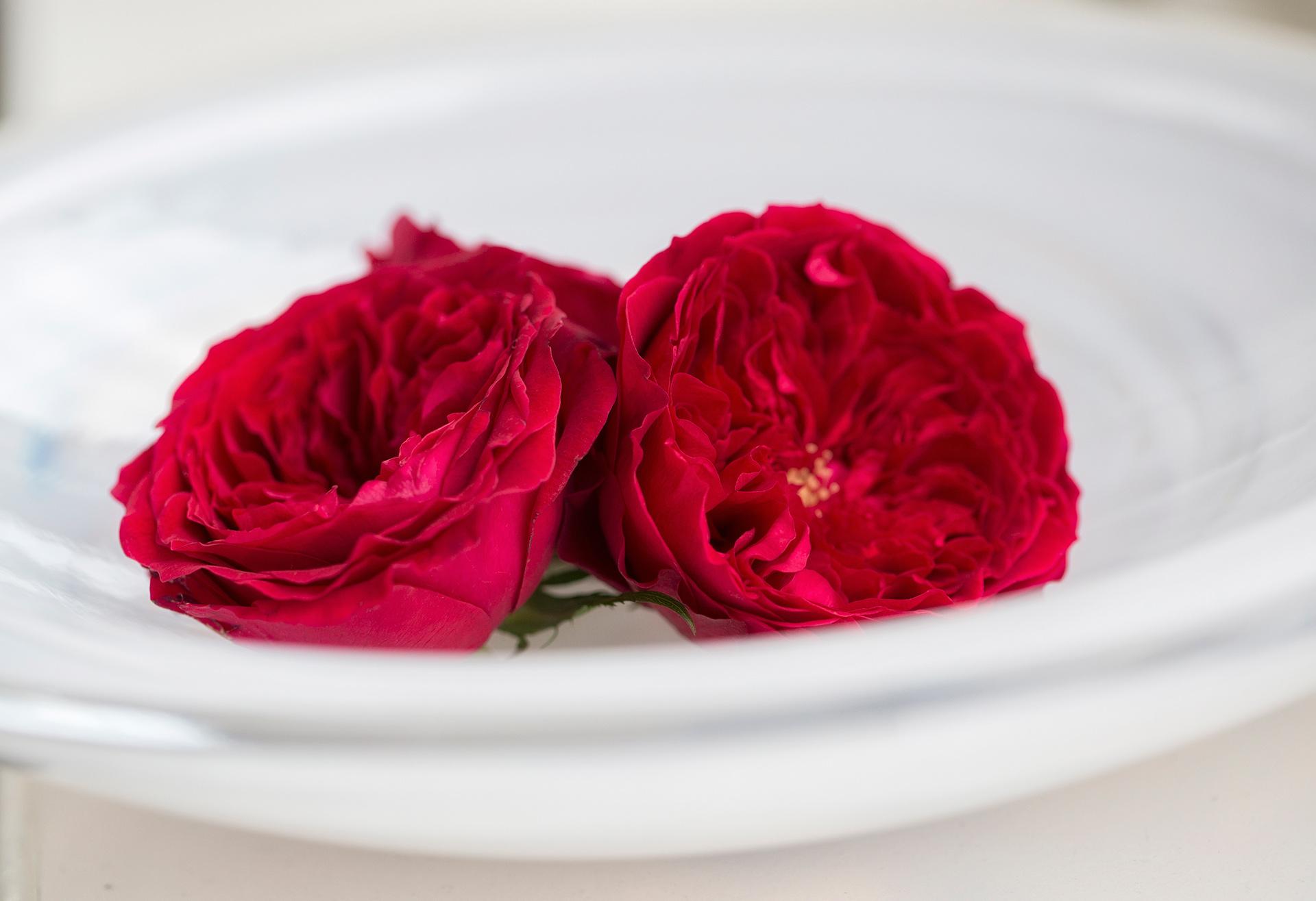 David Austin Tess scented roses
