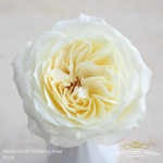 david-austin-wedding-rose-ella-large