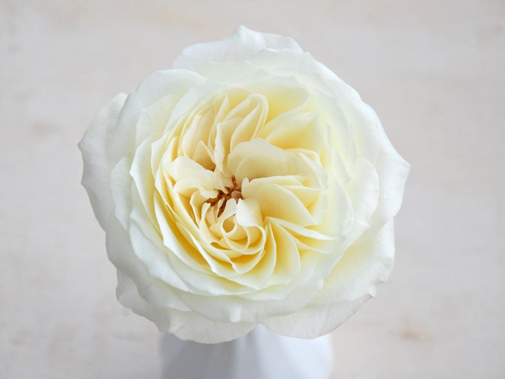 Three New David Austin Wedding Event Roses For 2019