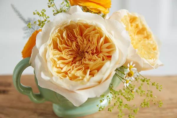 david-austin-wedding-rose-effie-ausgray