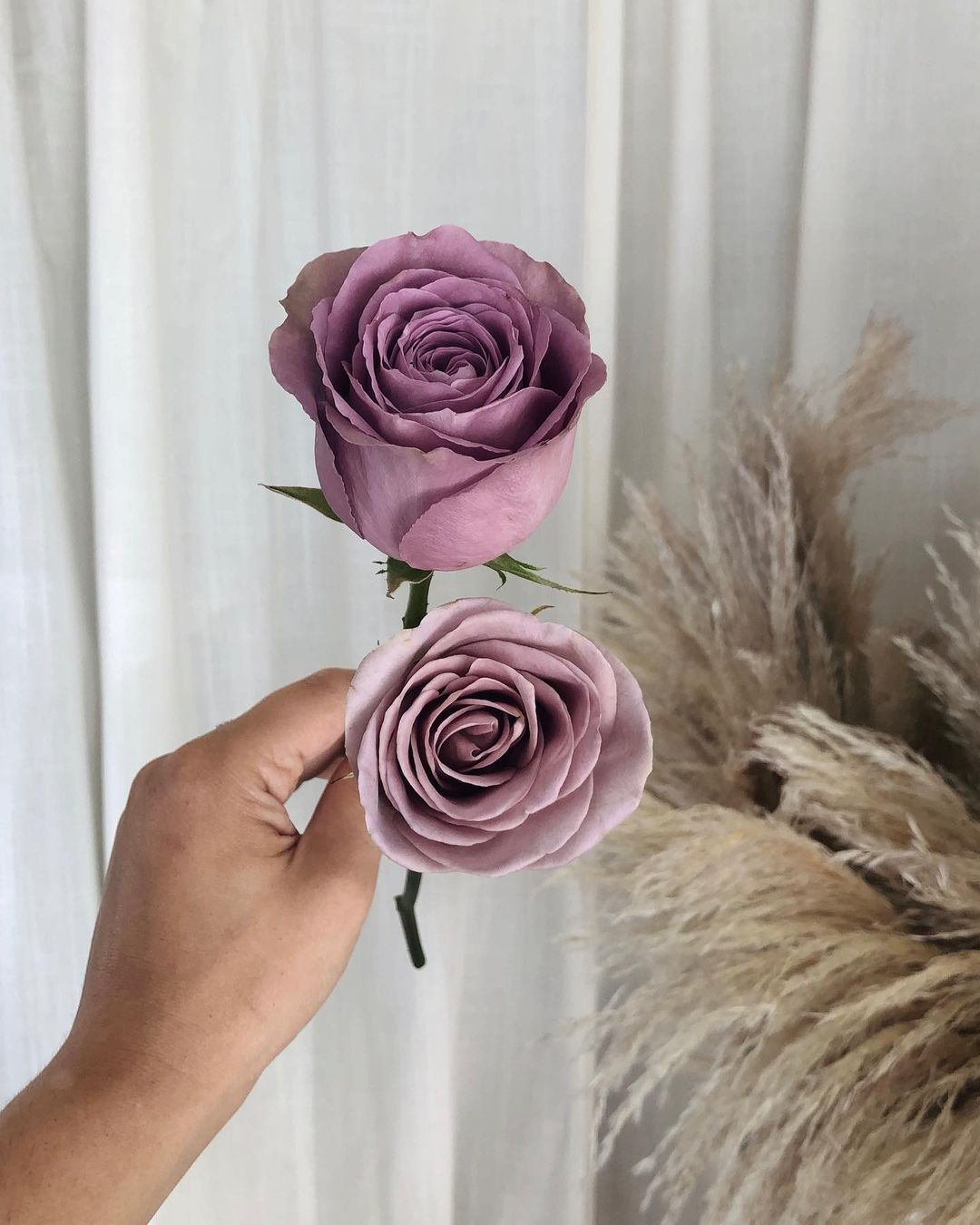 5 Heavenly Lavender Roses that You Will Love Tiara Roses