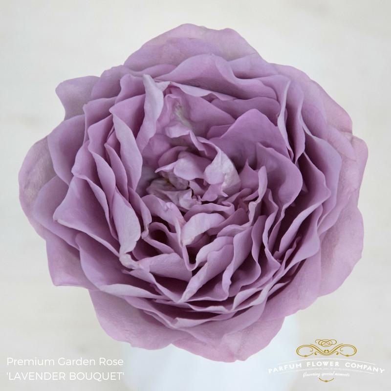 Lavender Roses Lavender Bouquet