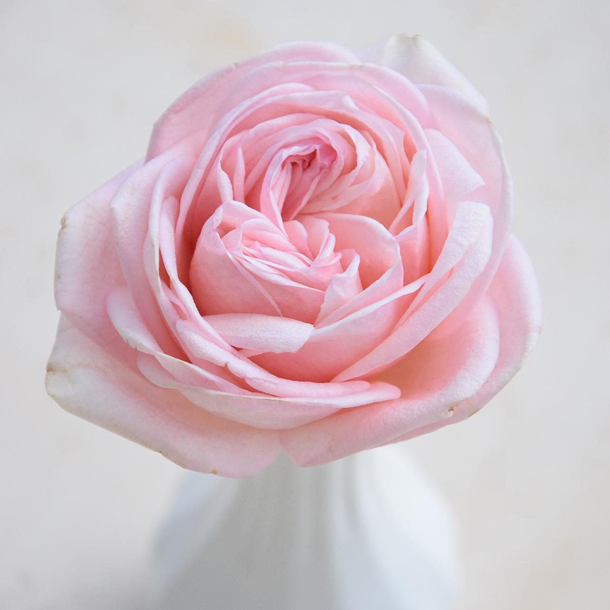 Sweet Angie Romantica